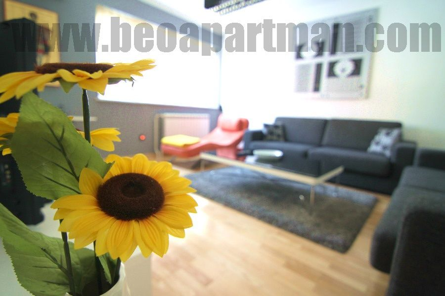 LOTUS apartment Belgrade, sunflower in living room